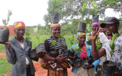 Projeto Emanguluko: Entrega de árvores de fruto a famílias em Angola