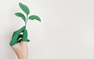 A que nos referimos quando falamos de sustentabilidade?