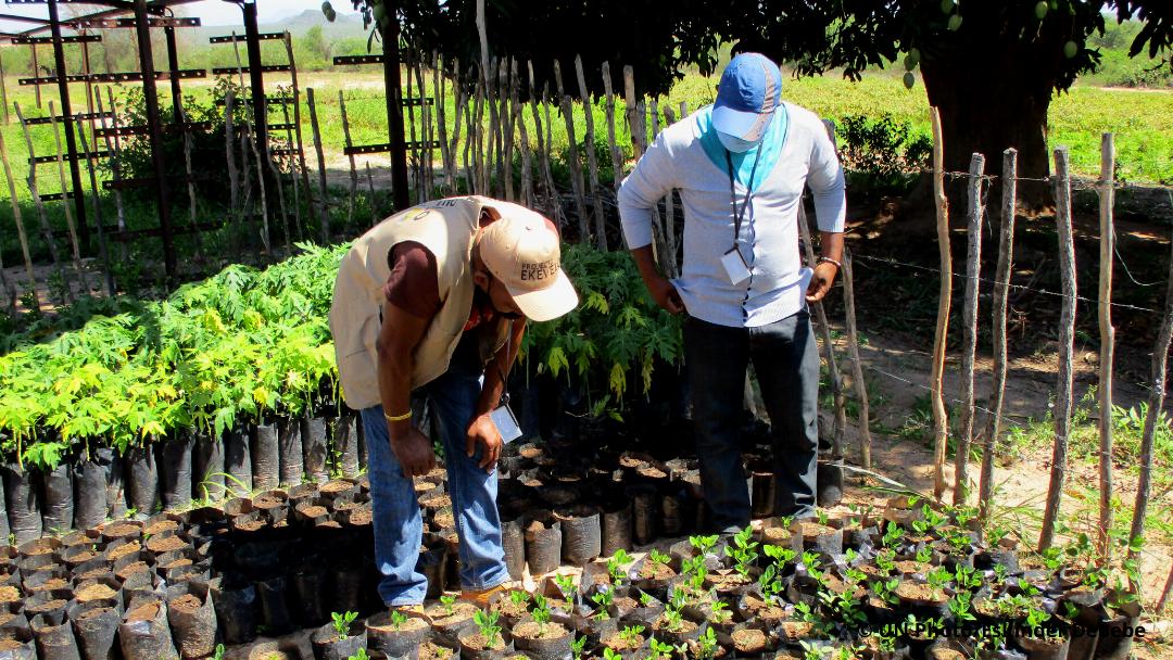 Angola: Produção de 3000 Plantas Forrageiras no projeto Ekevelo